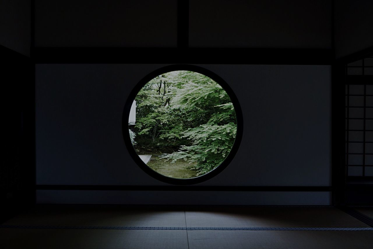 Trees in forest seen through circular window