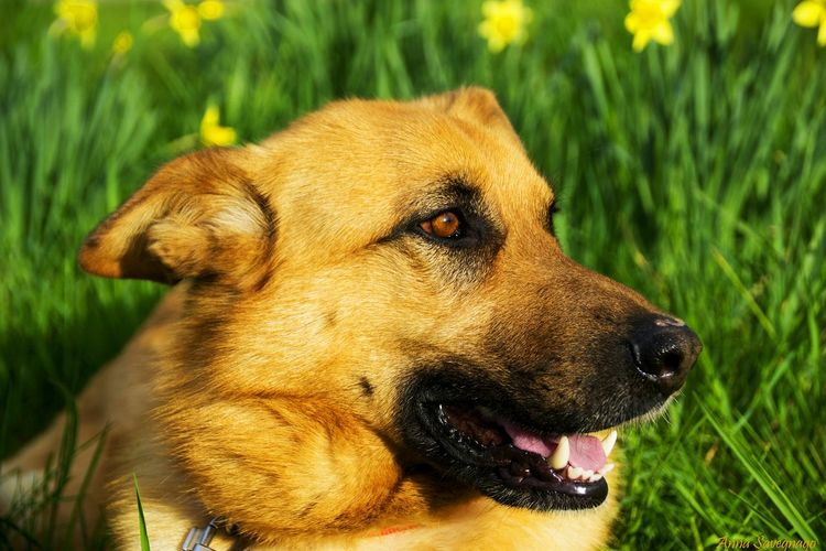 Animals Animal Themes Animal Head  Love Dogs Dog Doglover Brown Eyes Open Mouth Happiness Animallovers Animalphotography Animal Hair Animal Nose