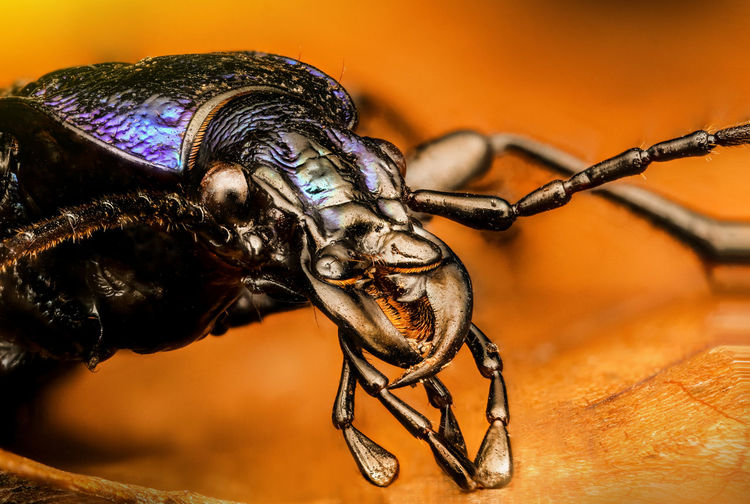 Close-Up Of A Beetle