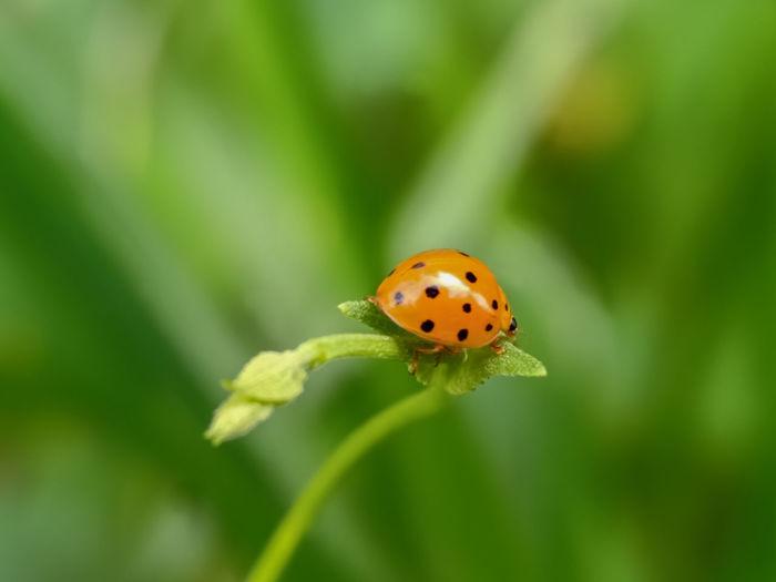 Close-up of ladybug on flower