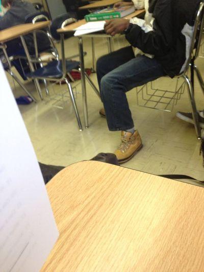 My Boy Shoes