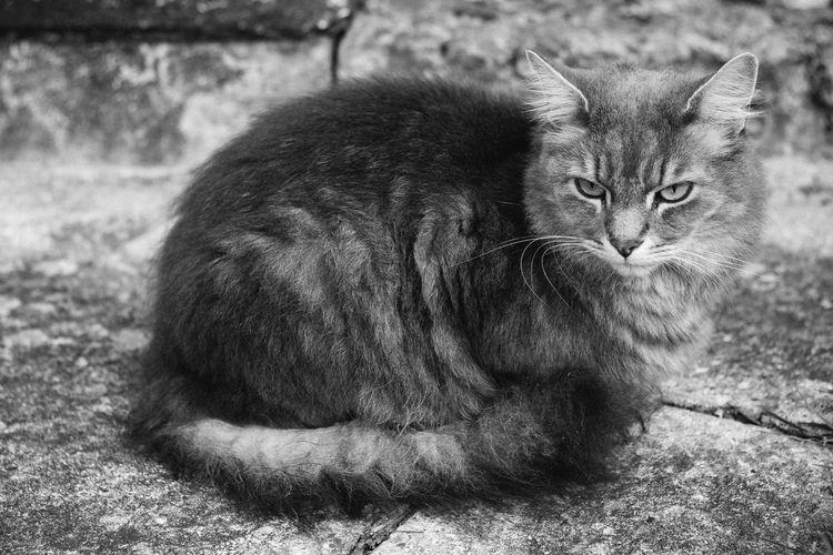 Cat Cat♡ Cat Lovers Catsagram Cats Of EyeEm Black & White Blackandwhite Kitty Hellokitty