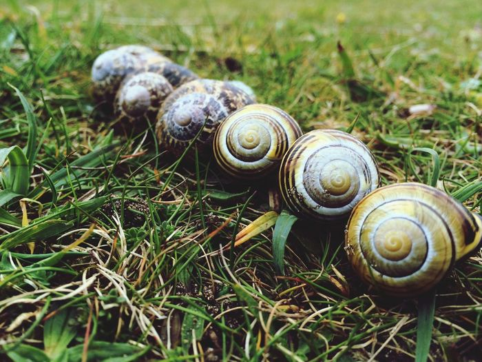 Close-up of snail on grassy field