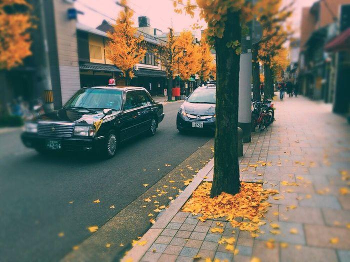 Ginkgo Ginkgo Of Kyoto Japan Japan Ginkgo Kyoto Kyoto Ginkgo Street Roadside Tree Sepia Fallen Leaves