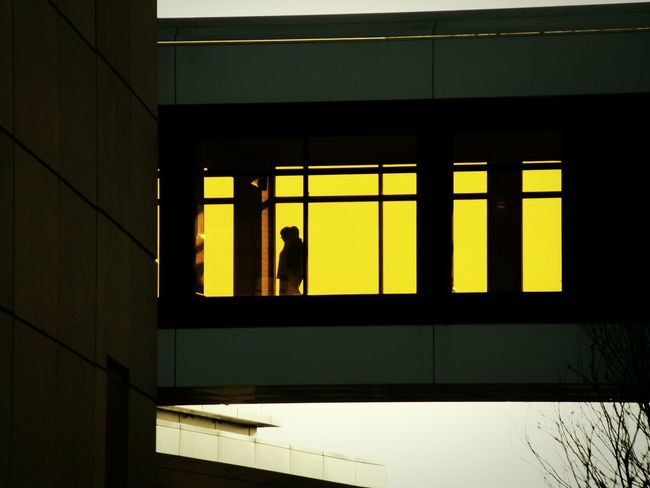 Perspective Rosemont Illinois Stroll Taking Photos Wandering EyeEm Gallery Yellow Silhouette