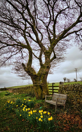 Beauty In Nature Bench Blossom Branch Daffodils Day Flower Freshness Grass Growth Idyllic Nature No People Outdoors Scenics Sky Springtime Tranquility Tree