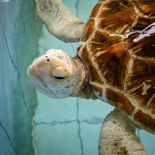 Close-up of turtle in sea