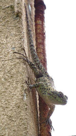 One Animal No People Mammal Animal Themes Animal Wildlife Animals In The Wild Day Low Angle View Nature Outdoors Domestic Animals Close-up Lizard Close Up Lizard Spiky Lizard