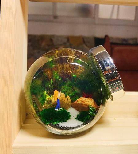 Animal Themes Bowl Close-up Day Fishbowl Food Food And Drink Freshness Indoors  Nature No People Ready-to-eat Table Water
