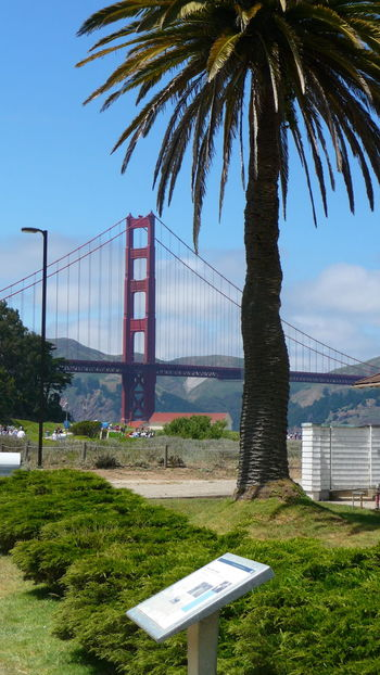 Bay Area Golden Gate Bridge San Francisco Senic View Architecture Built Structure City Day Grass No People Outdoors Palm Tree Senic Sky Tree