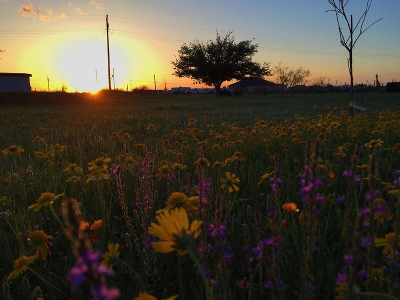 Things I Like 🌻🌼 Flowers Sunset IPhoneography Nature