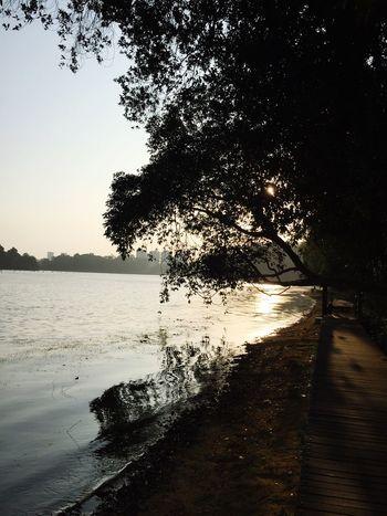 Park Macritchie Reservoir Morning Sunrise Sun