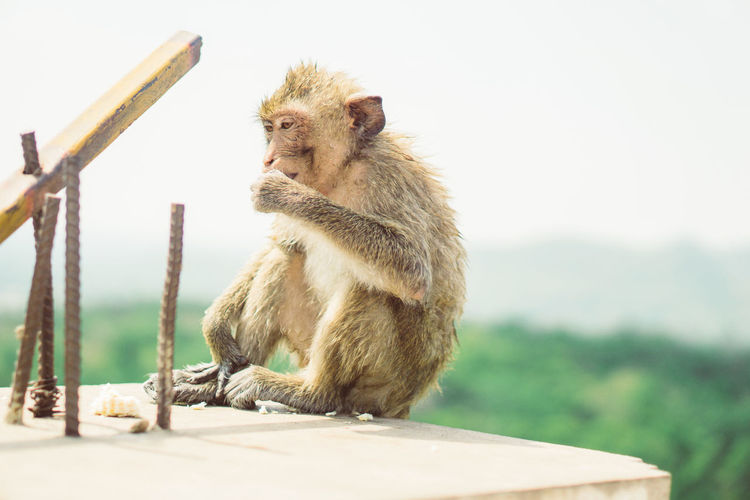 View of a monkey sitting on field