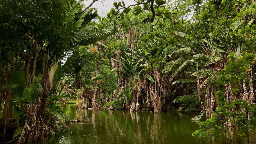 Пальмы, озера,