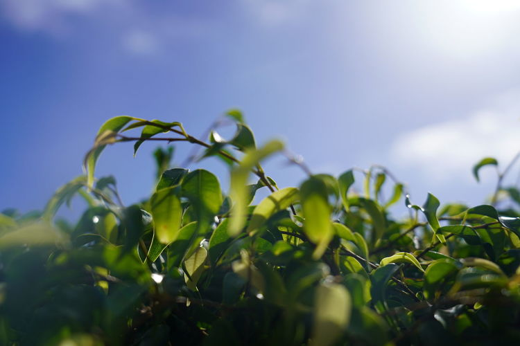 Low angle view of plant on sunny day
