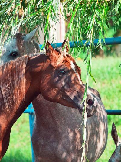 Horses standing against railing