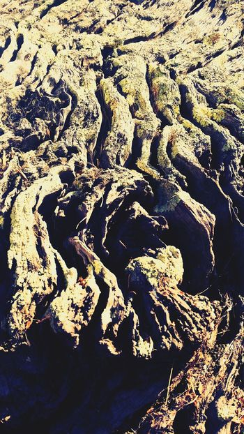 Backgrounds Full Frame Nature No People Outdoors Close-up Beauty In Nature Natural Pattern Fragility Treetrunk Patternsandtexture Mobilephone Photography Australianphotographer Through My Lens Growth Knotted Wood Tree Pattern Textured  Through My Lens Australian Nature Beauty In Nature Welcome To Black