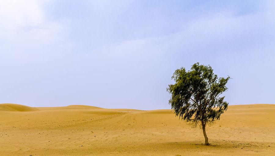 Rare desert vegetation Tree Plant Environment Sky Landscape Nature Non-urban Scene Scenics - Nature Tranquil Scene Arid Climate Rare Desert Vegetation Tree Thar Desert India Rajasthan Sand Desert Single Tree