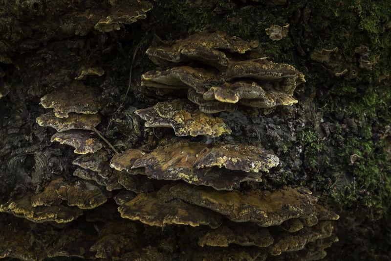 Nature Photography Fungi Fungi Close Up Fungi Growth Fungi On A Log Fungi On Tree Fungii Fungi🍄 Macro Macro Nature Macro_collection Nature_collection Nature_perfection Naturephotography Woodscapes