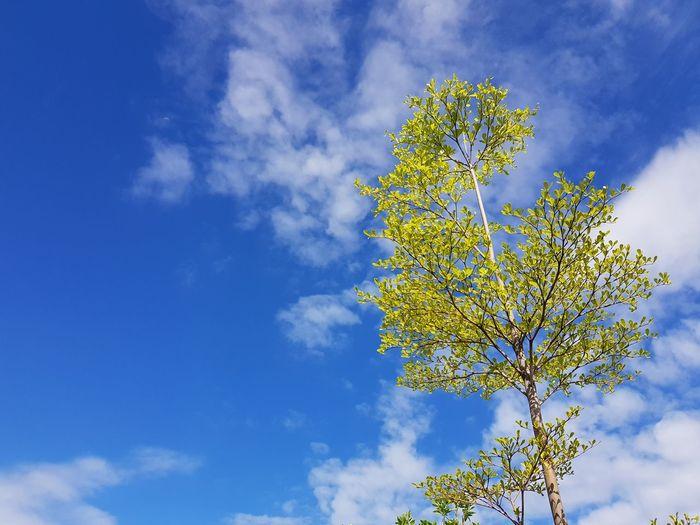 Sunny Blue Sky.