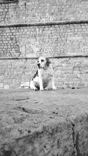 Dogs Dog❤ Dog Love Dogs Of EyeEm Dubrovnik Old Town Dubrovnik Cathedral Dubrovnik, Croatia Croatia Old Buildings Dubrovnik Harbour