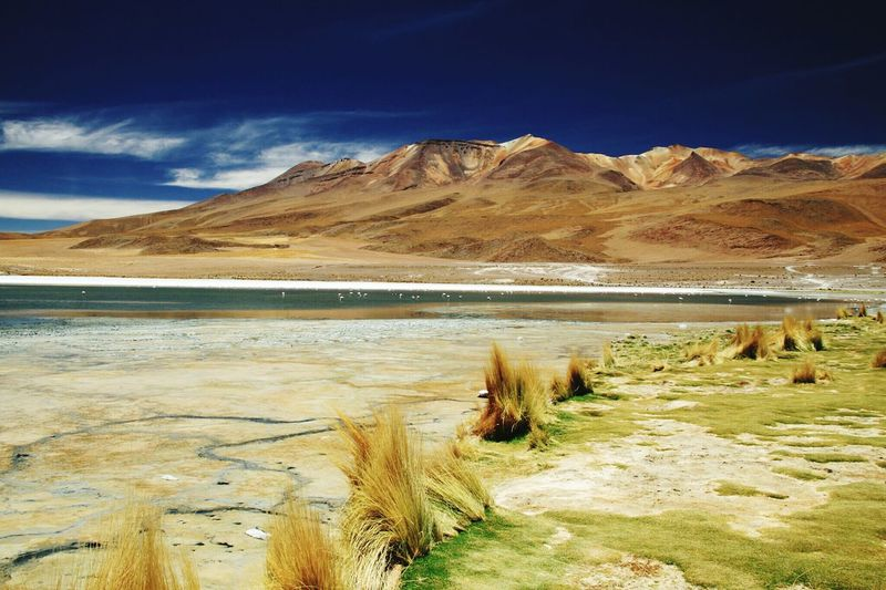 Bolivia Landscape_photography Pink Flamingos Dark Blue Sky Mountains Nature Beauty In Nature Lake Landscape Outdoors No People Day Travel Destinations Water Cloud - Sky Physical Geography Blue Grass Nature Reserve Standing Water Rocky Mountains Geology Natural Landmark Calm Natural Arch