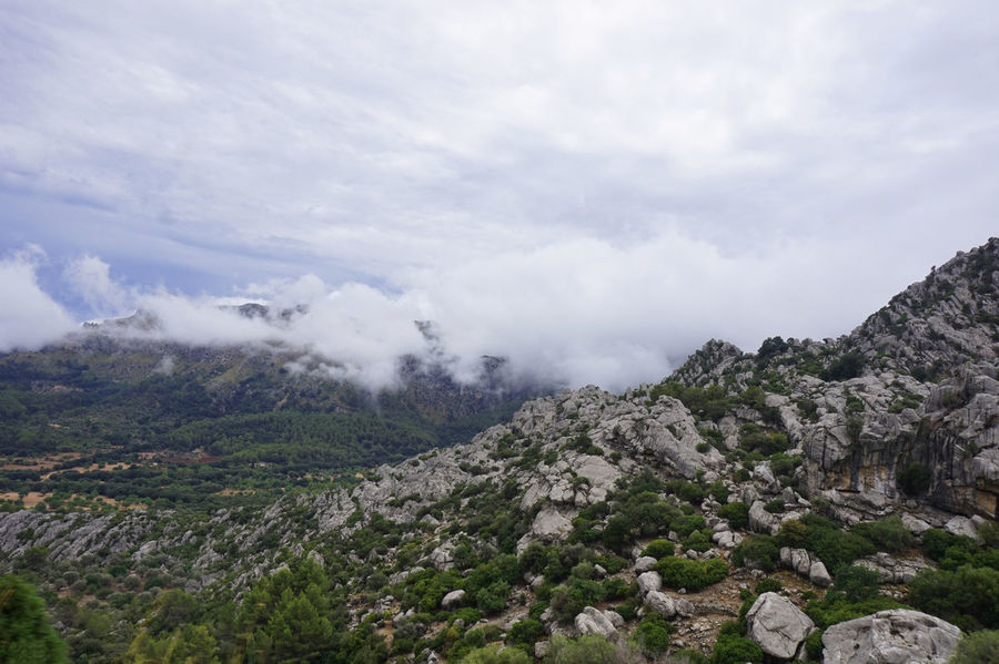Mountain view Beauty In Nature Cloud - Sky Day Fog Forest Landscape Lush - Description Mountain Nature No People Outdoors Pinaceae Pine Tree Pine Wood Pine Woodland Scenics Sky Tea Crop Tree Winding Road