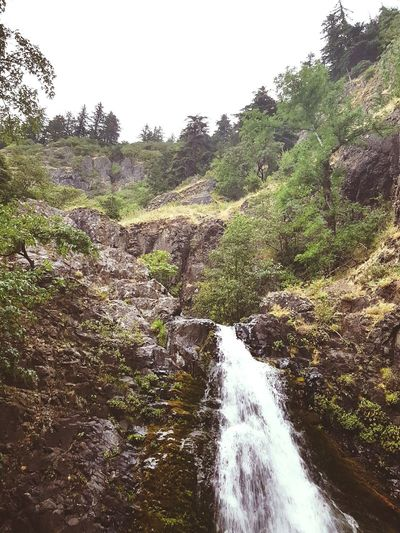 Dog Creek Falls & the hillside above it 2016. Tree Landscape Nature No People Beauty In Nature Scenics The Great Outdoors - 2017 EyeEm Awards Water Stream - Flowing Water Washington State Hillside View Hillsides Hillside Waterfall Waterfall_collection Waterfalls Falls Creeks Creek Pacific Northwest Beauty Pacific Northwest  PNW PNWonderland Pnwnaturescapes Pnwexplorations Lost In The Landscape