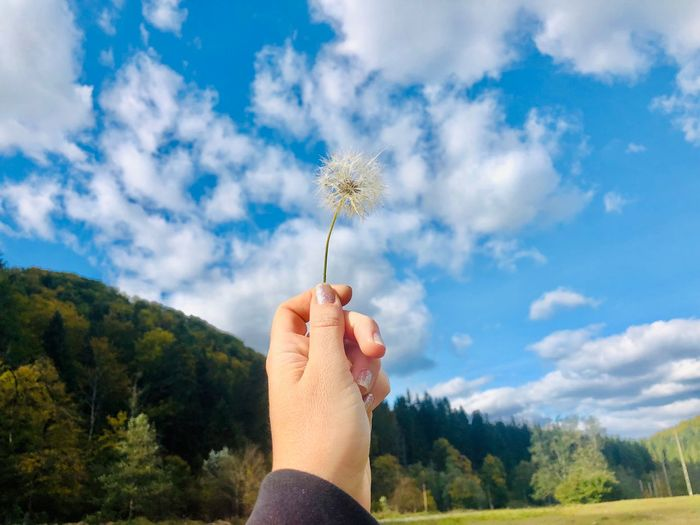 Cropped hand holding dandelion against sky