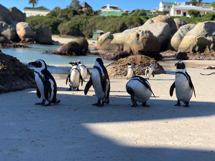 Like a penguins Animal Themes Animal Bird Animals In The Wild Vertebrate Animal Wildlife Beach Nature
