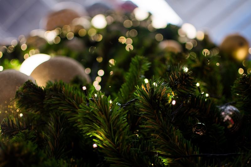 Plant Tree No People Growth Nature christmas tree Celebration Christmas Decoration Holiday Close-up Christmas Lights Outdoors Lens Flare Focus On Foreground Christmas Green Color Illuminated Christmas Ornament Decoration Night