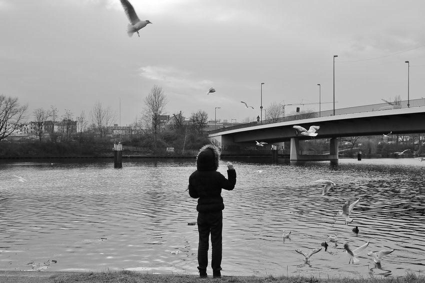 Berlin Bird Brücke City City Life Day Himmel Lifestyles Menschen Möwe Outdoors People River S/w Sky Spree Trzoska Water Winter