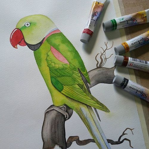 Parrot Watercolor Watercolour WaterColorCollection Mypainting Painting Enjoying Life Art, Drawing, Creativity Art Bird Parrot