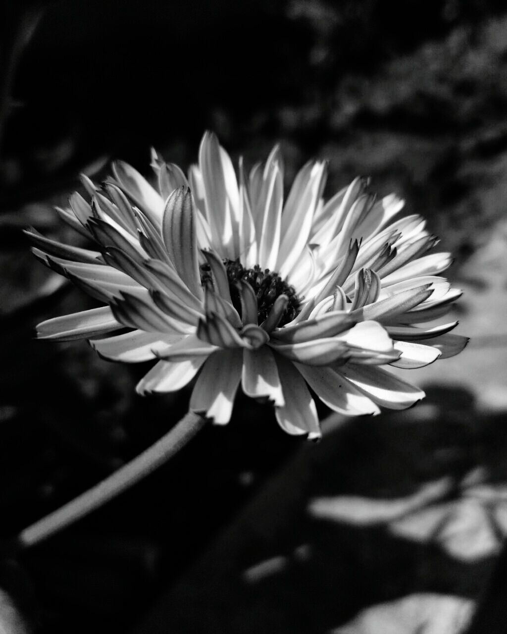 flower, petal, fragility, nature, freshness, growth, beauty in nature, flower head, plant, blooming, close-up, no people, outdoors, day