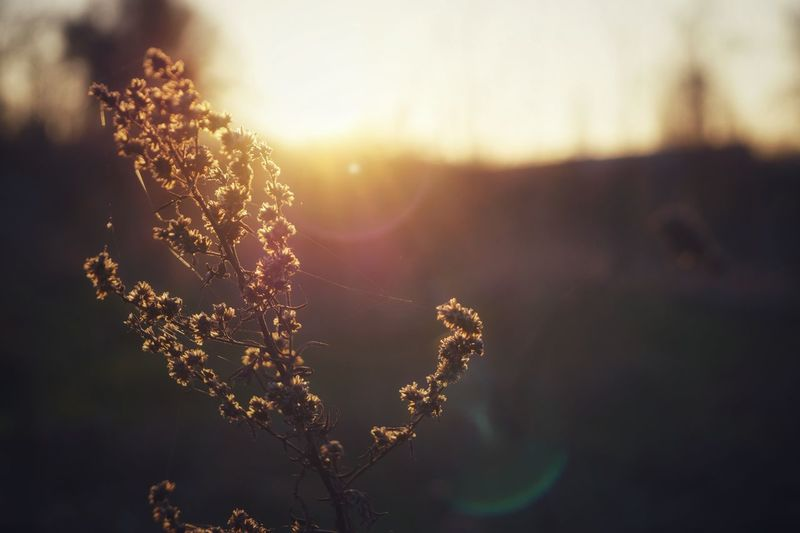 Sonnenuntergang Tree Defocused Sunset Rural Scene Sunlight Sun Silhouette Dawn Summer Sky Sunbeam Pollen First Eyeem Photo