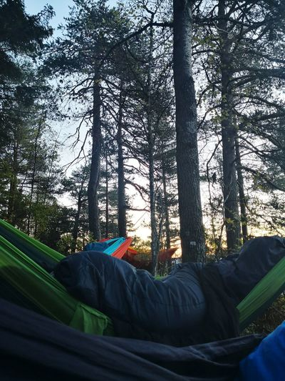 Oslomarka Forest Woods Trees Tree Hammock Camping Hiking Tree Forest Relaxation Lying Down Sky Hammock