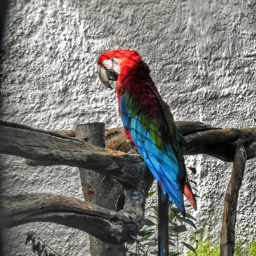 Animal colours Arara Araraazul Zoo Colorful Beautiful Nature