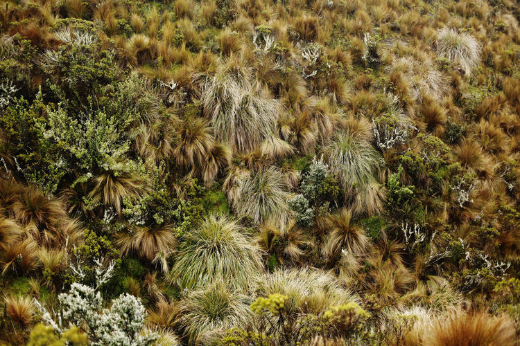 Ecuador Plant Day Nature No People Growth Land Beauty In Nature Field Outdoors Animal Themes Tree Animal Wildlife Animal Grass Mammal Full Frame Non-urban Scene Tranquility Environment Scenics - Nature Kotopaxi