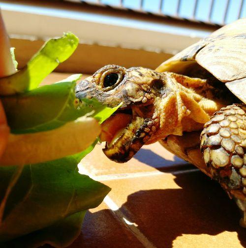 Ñam! First Eyeem Photo Turtle 🐢 Eating Eating Healthy Day Vilanova I La Geltru Animal Themes Domestic Animals Pets