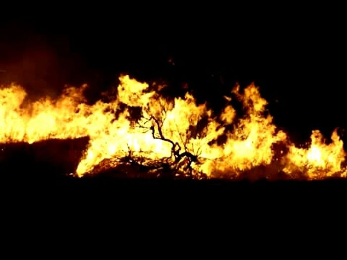 wild fire African bushveld Wild Fire Burning Flame Heat - Temperature Night Silhouette Destruction Nature No People Bonfire Inferno Fireball
