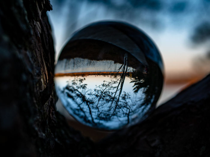 Reflection Close-up Selective Focus No People Nature Tree Outdoors Day Focus On Foreground Sphere Plant Geometric Shape Glass - Material Shape Circle Cold Temperature Crystal Ball Tree Trunk Wood - Material Design Tire Wheel