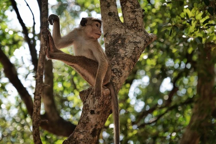 Tree Animals In The Wild Animal Themes Primate Mammal Animal Wildlife Animal Monkey Plant Low Angle View One Animal Branch Focus On Foreground Vertebrate Day Nature No People Sitting Outdoors Forest