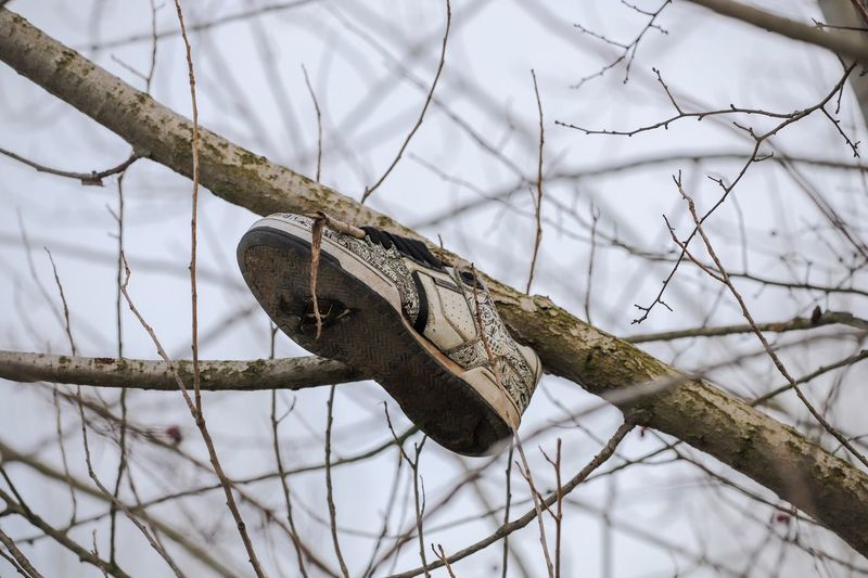 Shoe in tree Shoe EyeEmBestPics Focus On Foreground Close-up No People Tree