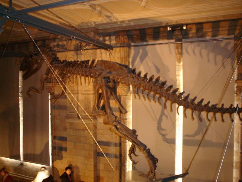 Dinosaurs DinosaursAroundTheWorld London Natural History Museum Animal Themes Close-up Day Indoors  Museum Natural History No People Skeleton