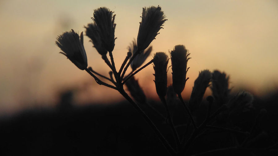 Nature Silhouette Sunrise Nature Beauty In Nature Close-up Day Field Flower Focus On Foreground Fragility Freshness Growth Natue Sunrise Silhouette Nature Nature Sunrise Nature Sunshine No People Outdoors Plant Rijall Rijall Blues Rijallblues Silhouette Sky Sunrise Sunset Sunshine