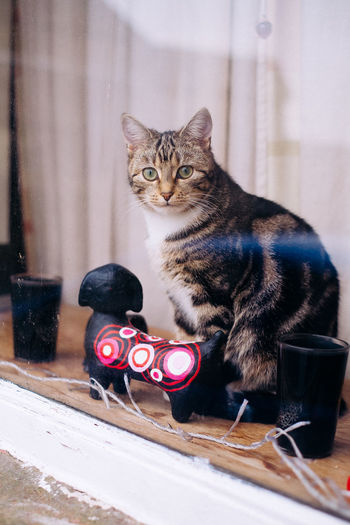 A cat observe passer by near Lancaster Wait Winter Animal Themes Cat Close-up Cold Domestic Cat Pets Sitting Window