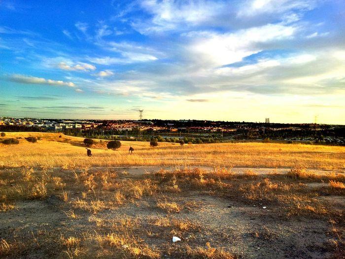 Vista de Sanse desde La Dehesa con Madrid y sus torres de fondo GetYourGuide Cityscapes WeatherPro: Your Perfect Weather Shot