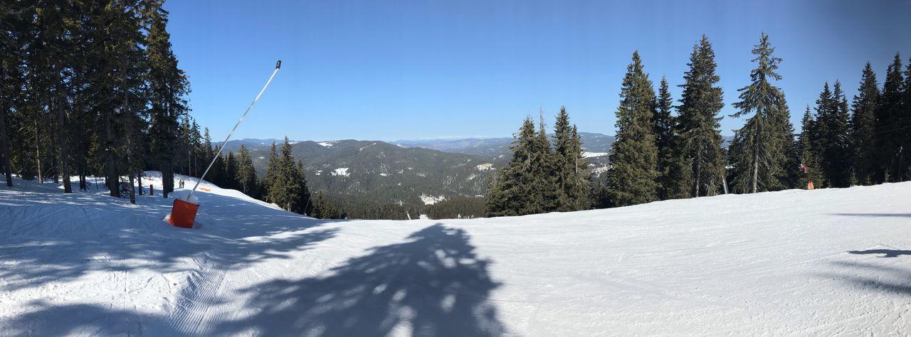 Skiing Nature