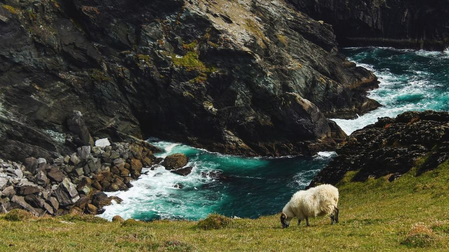 Sheep grazing on field against sea