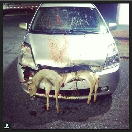 regram @roadkills_of_instagram2 Photo credit @_seth7 The Prius isn't as eco friendly as it claims. Roadkill Roadkillsofinstagram